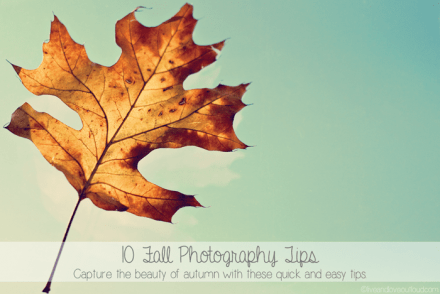 10 Fall Photography Tips by Live and Love Out Loud