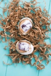Tutorial | Photo Transfer Easter Eggs