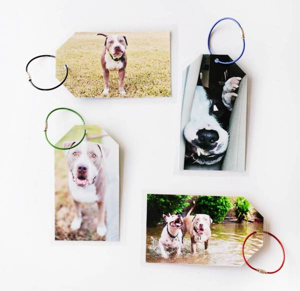 Dog Luggage Tags
