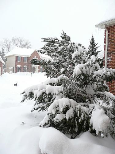 snowmageddon 2010 DC, scrappinmichele's poor tree