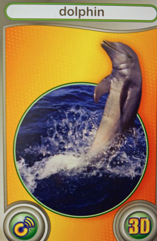 dolphin card from wild animal adventures