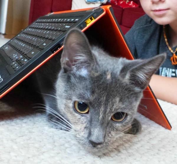 lenovo-yoga-11s-cat-in-tent