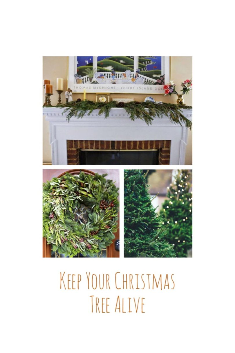 Make Your Live Christmas Tree, Wreaths and Garland Last Longer @Aprilaire #IAQbyAprilaire