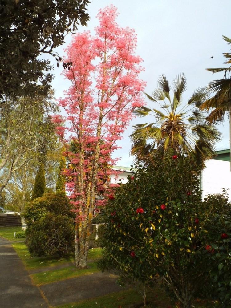 Flamingo tree leaves: Festival of leaves Week 3 (2/6)