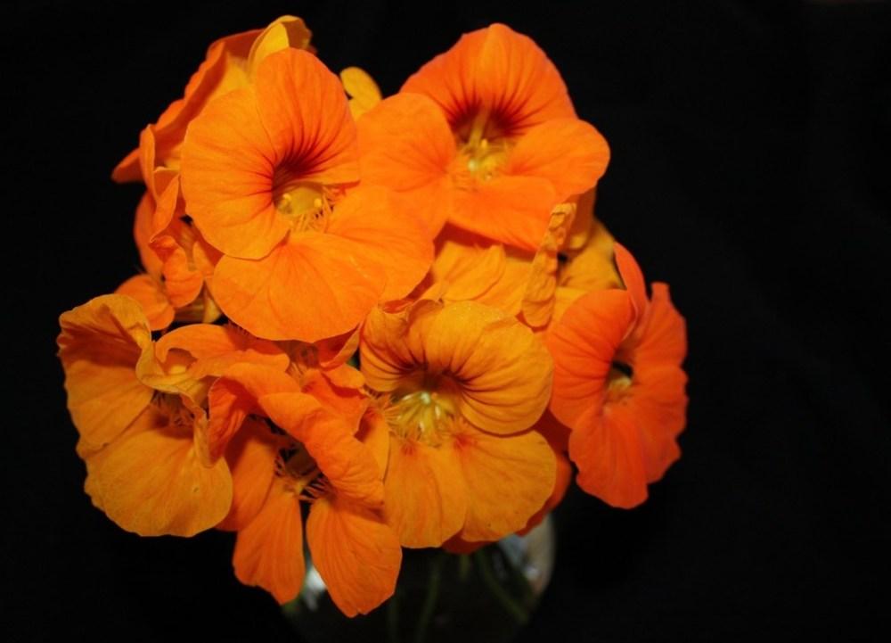 Kappertjie/ Nastartium : Flower power (2/3)