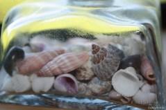 Shells in glas bottle