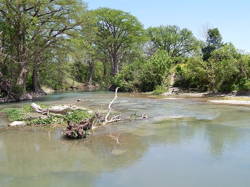 San Marcos River 4