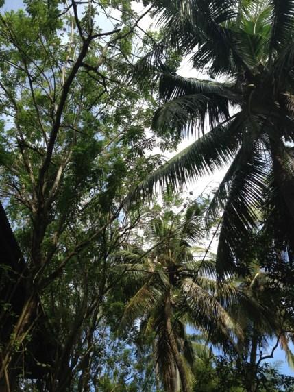 Nusa Lembongan Alam Nusa 1