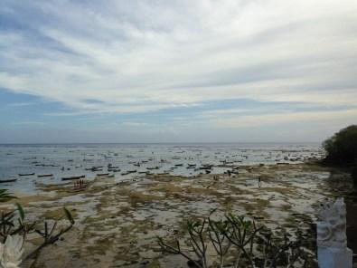 Nusa Lembongan zeewierplantages