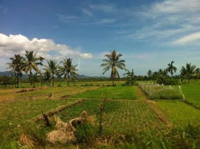 Lombok nature 7