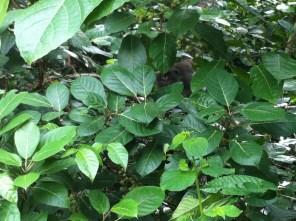 Lombok wild monkey