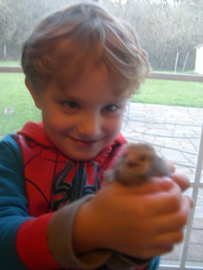 Grandson is gonna eat that chick. Just kidding, he was kissing the little one. Have you kissed a chick today?