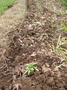 Last fall 2013 we raked up all the leaves on the property and dumped them on weedy parts of the garden. Cut my weeding by 3/4 this spring. The dirt is softer and extra fiber the dirt has more microbes, worms, easier to work with.