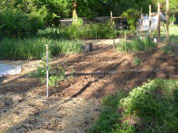 Green Bean beds ready to go