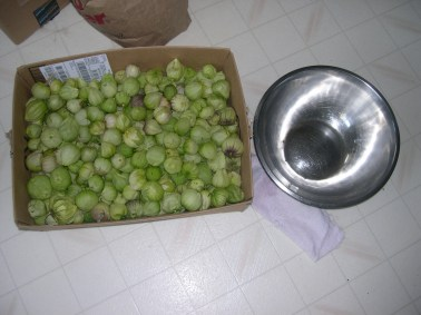 The last of our tomatillos need to be husked.for salsa.