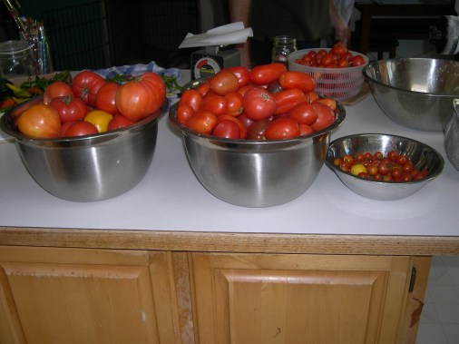 Still processing tomatoes. Stored green tomatoes and canning them as they ripen.