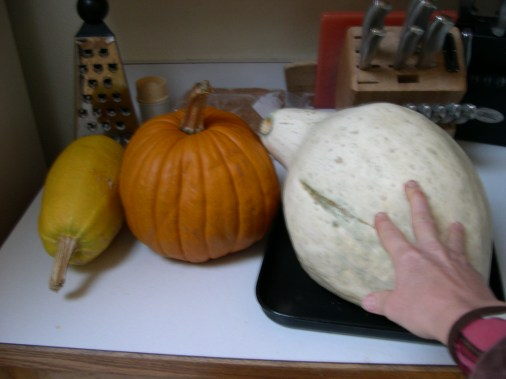 Pumpkins and squash for chicken feed.