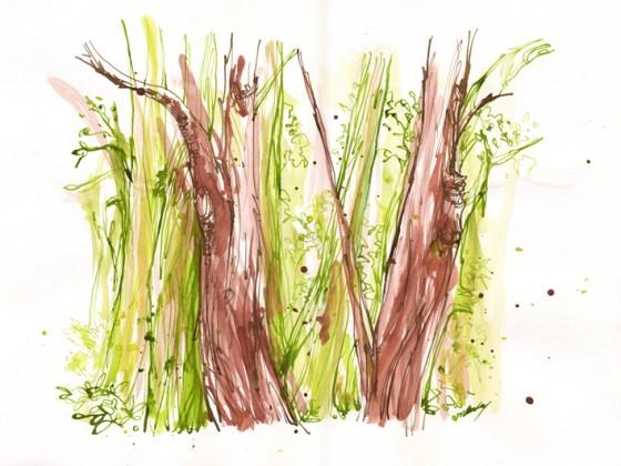 Watercolours/brush and inks/dip pen