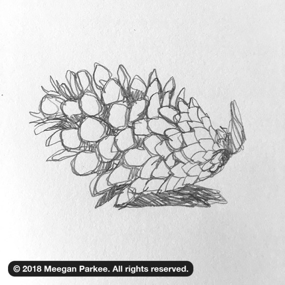 Exercise_1_pinecone_1