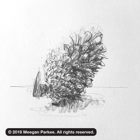 Exercise_1_pinecone_4