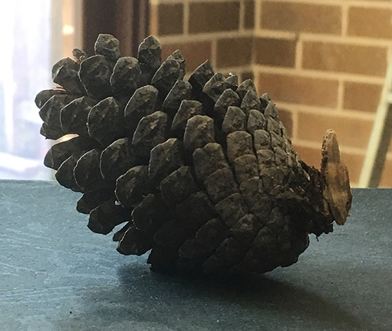 Exercise_1_pinecone_image_1
