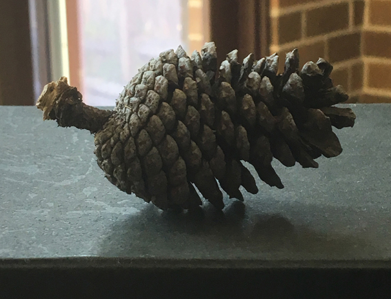 Exercise_1_pinecone_image_2