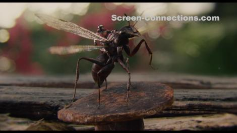 Ant-Man-2D.Blu-ray.Image-03