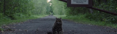 [Blu-Ray Review] 'Pet Sematary': Available On 4K Ultra HD, Blu-ray & DVD July 9, 2019 From Paramount 8