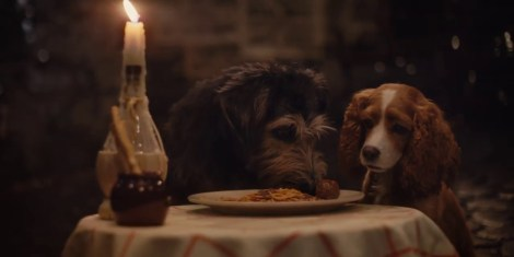 two dogs at table