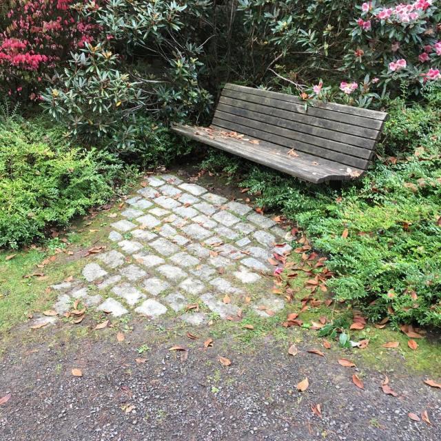 fall at Kubota Garden