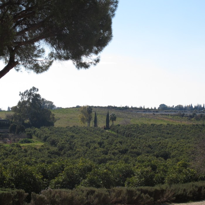 Ave Maria Farm has 20 hectares of orange trees.