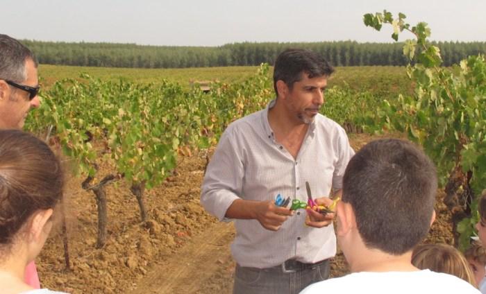 Bollullos, wine, Huelva, Condado de Huelva, Andrade, Bodegas Andrade, Grupo Sentire