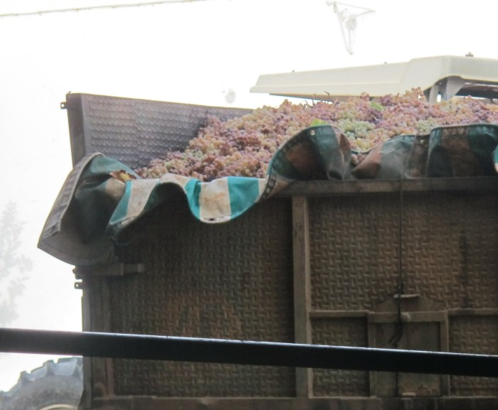 Grapes arrive in a trailer from the vineyards, about 20 minutes' drive away.