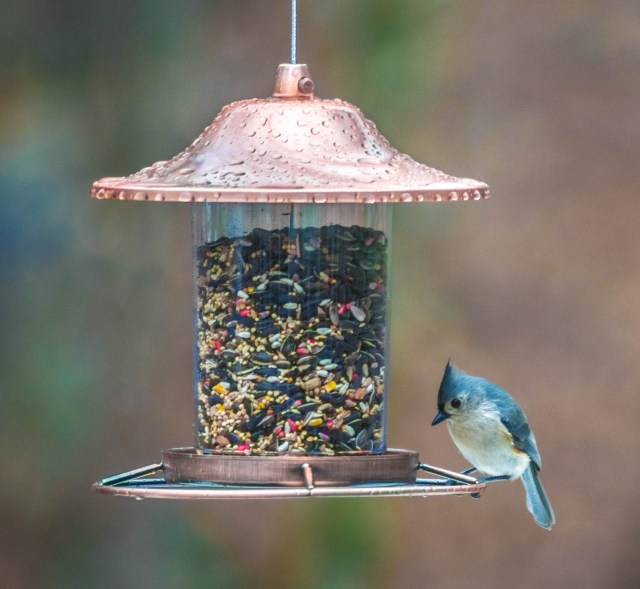 Fav Foto Friday Titmouse in the Rain