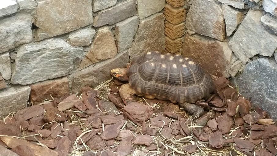 Parrot Store Medium Tortoises