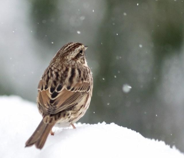 Bird watching snow fall