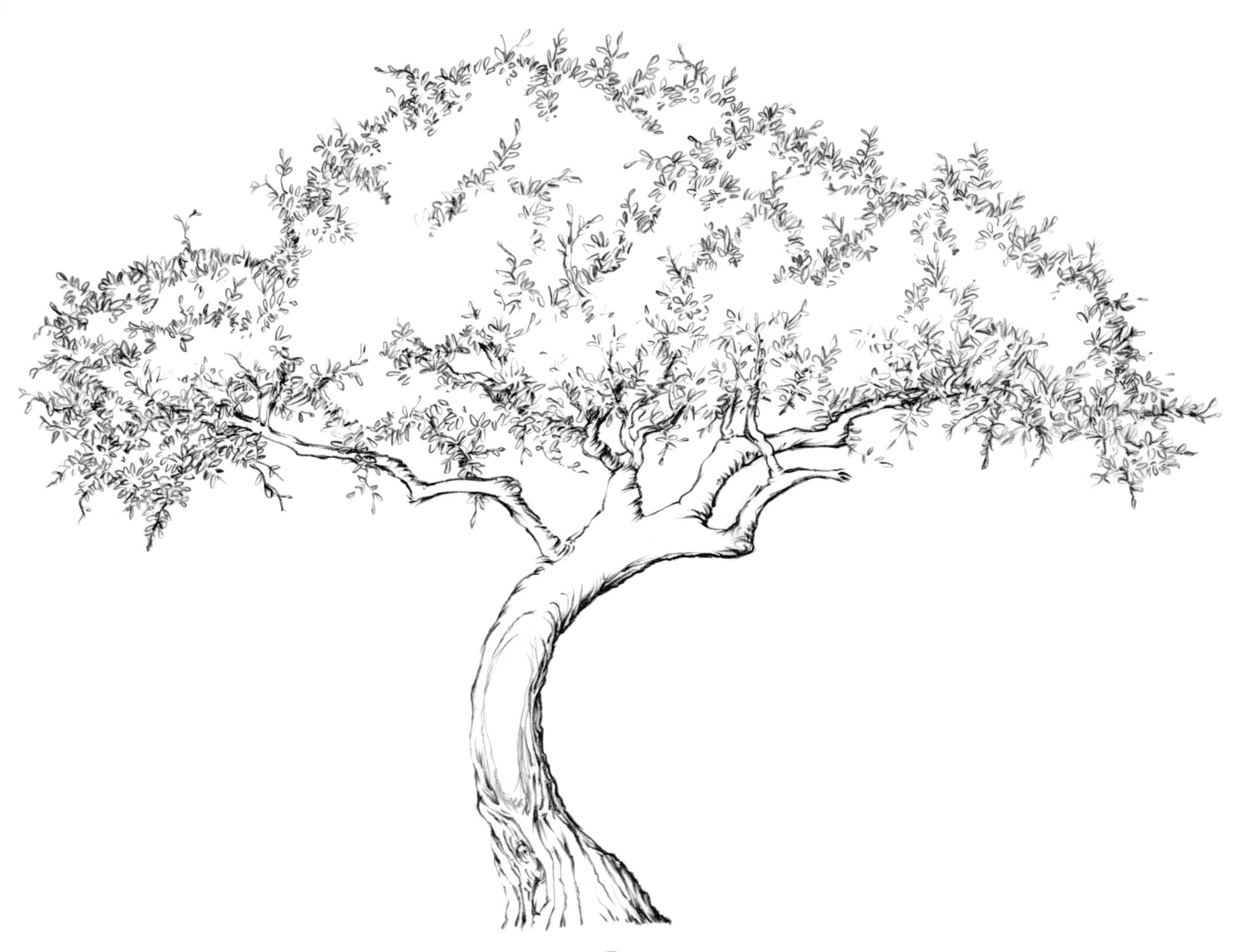 Drawing Lesson Tree
