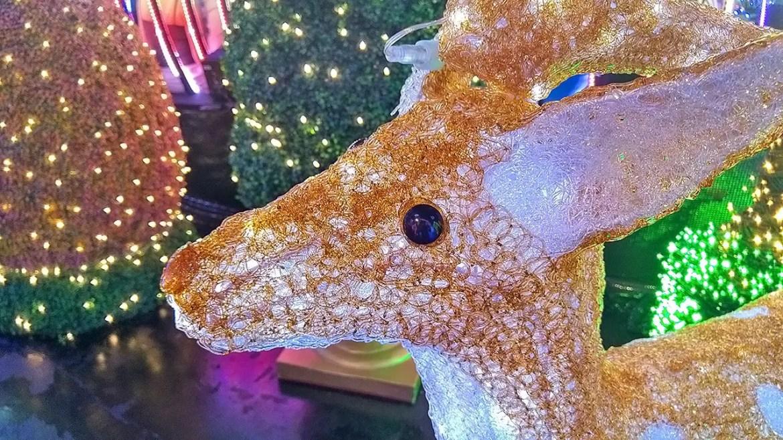 Reindeer at Universal Journey 2016.