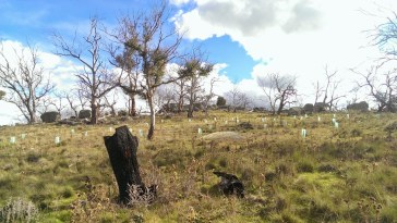 Landcare trial restoration site