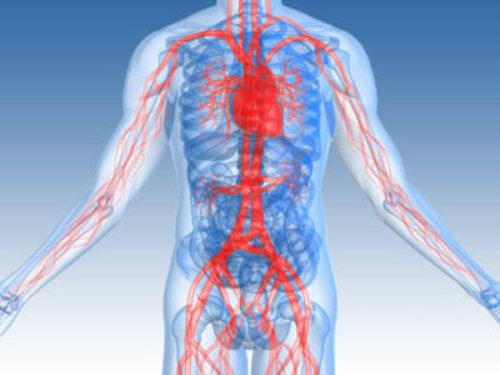 Vascular Surgery Transcription