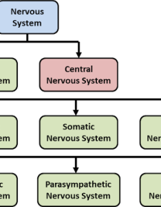 Figure components of the nervous system also pacific medical training blood pressure rh scribeschool