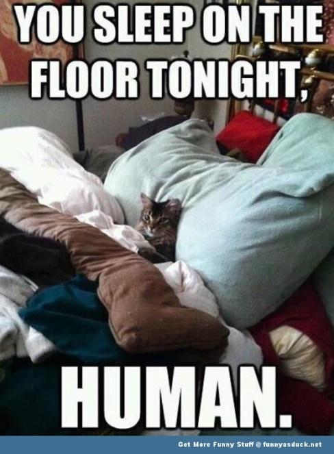 funny-cat-in-bed-meme