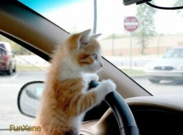 Funny Kitten pictures 7