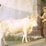Le rôliste et la vache