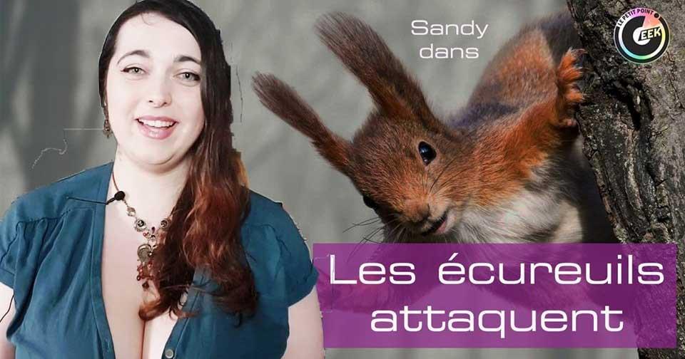 les écureuils attaquent