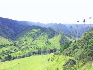 Absolutely Everything You Need To Know Before Hiking The Cocora Valley