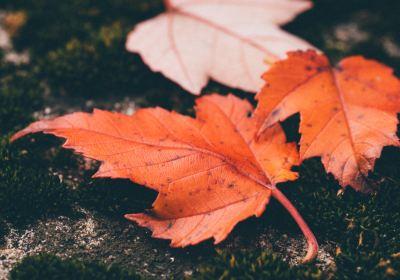 Community News – Fall 2017