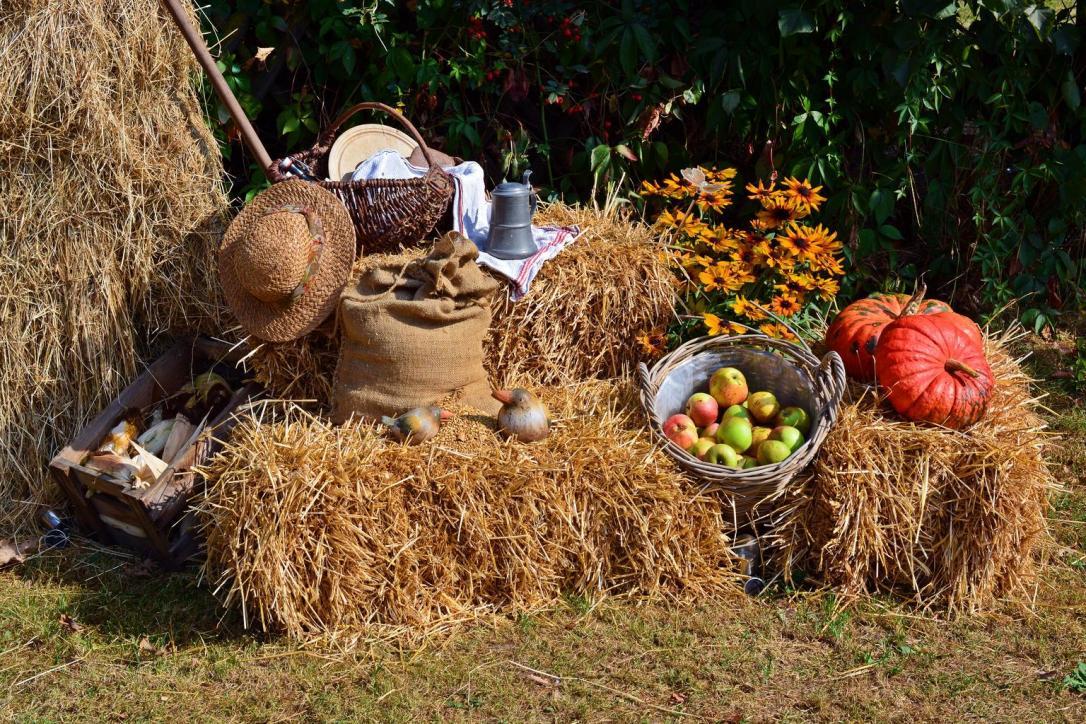 harvest_harvest_festival_1642294