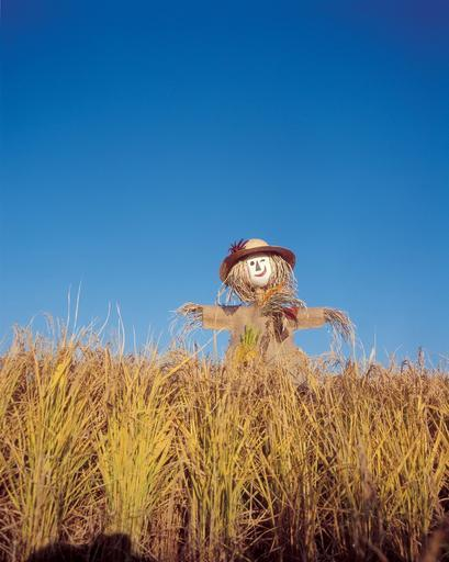 scarecrow_in_green_rice_0