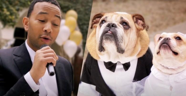 Photo of ჯონ ლეგენდი უმღერის თავის ახლადდაქორწინებულ ძაღლებს